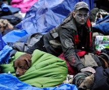 Protester with dogs in sleeping area in Zucotti Park during the Occupy Wall Street demonstrations, NYC