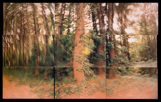 TREE STUDY 1987