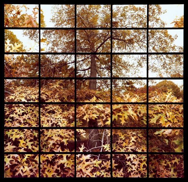 OAK TREE CENTRAL PARK 1983